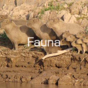 Fauna-02